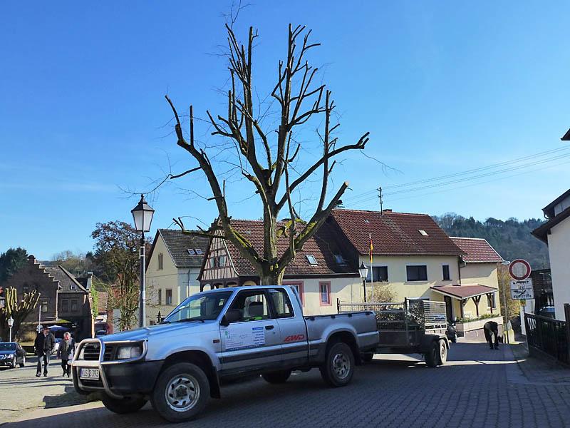 Prächtig Baumschnitt, Heckenschnitt - Kaiserslautern,Lauterecken,Meisenheim &RK_86