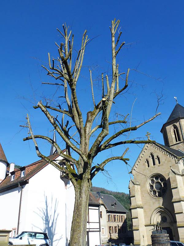 Gemeinsame Baumschnitt, Heckenschnitt - Kaiserslautern,Lauterecken,Meisenheim &VN_69